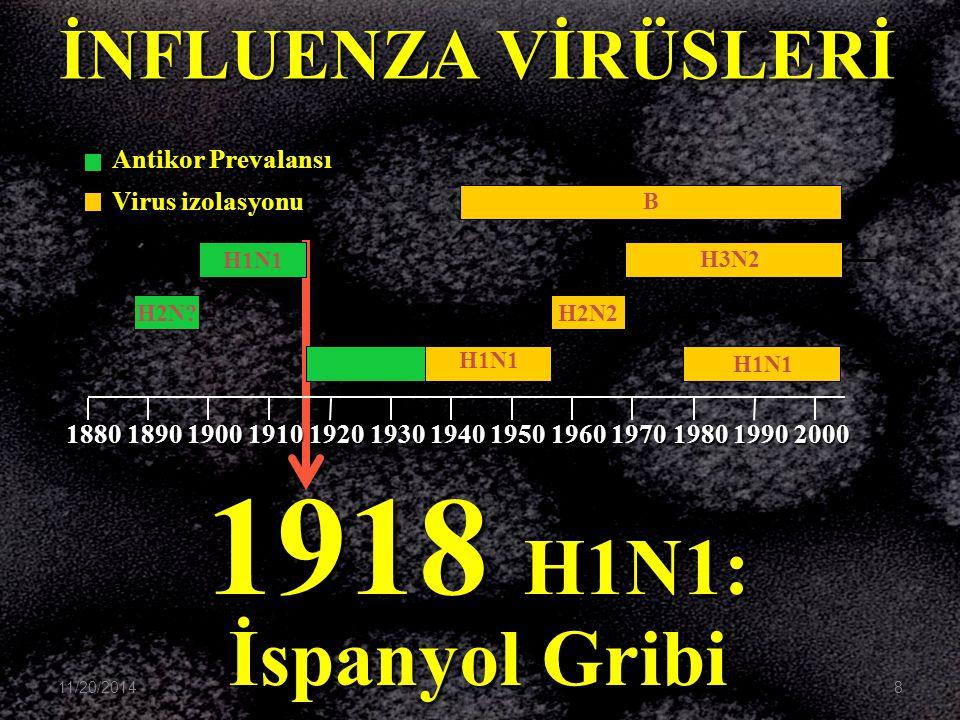 1918 H1N1: İspanyol Gribi İNFLUENZA VİRÜSLERİ Antikor Prevalansı
