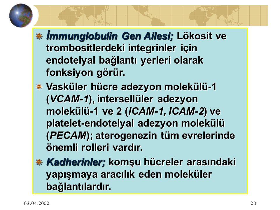 İmmunglobulin Gen Ailesi; Lökosit ve trombositlerdeki integrinler için endotelyal bağlantı yerleri olarak fonksiyon görür.