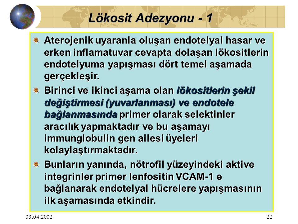 Lökosit Adezyonu - 1