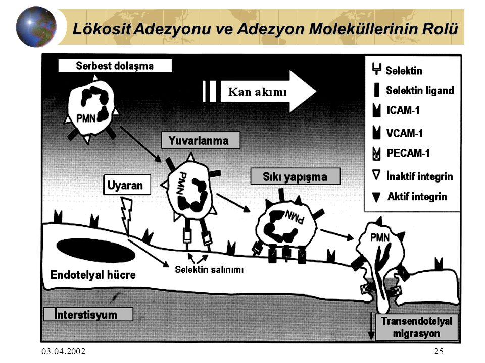 Lökosit Adezyonu ve Adezyon Moleküllerinin Rolü