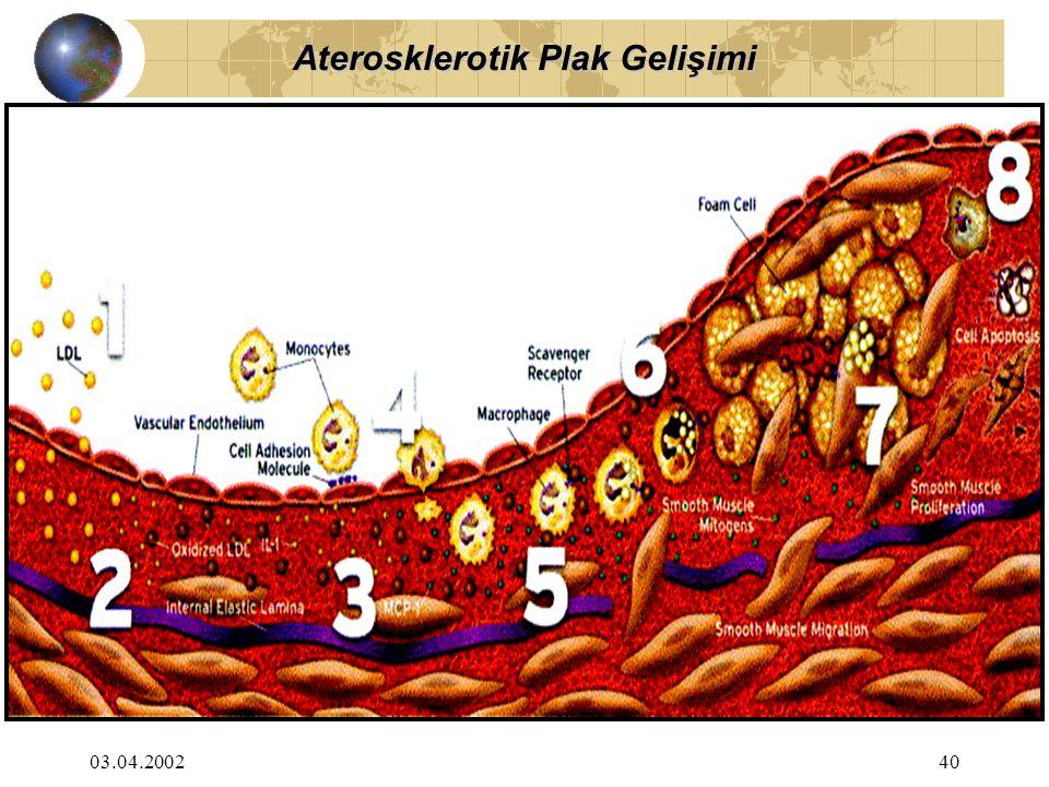 Aterosklerotik Plak Gelişimi
