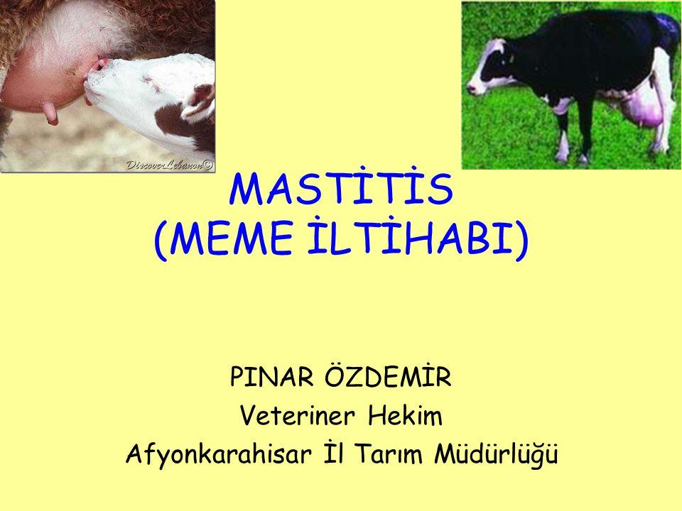 MASTİTİS (MEME İLTİHABI)