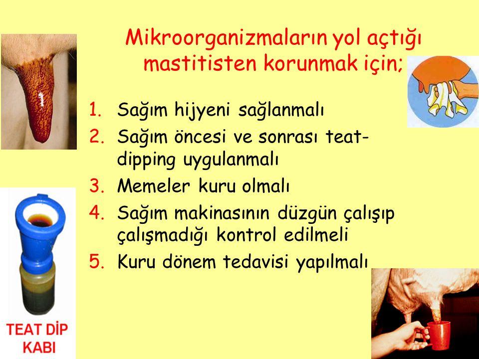 Mikroorganizmaların yol açtığı mastitisten korunmak için;