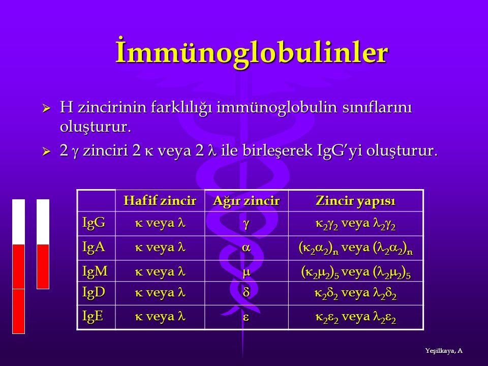 İmmünoglobulinler H zincirinin farklılığı immünoglobulin sınıflarını oluşturur. 2 g zinciri 2 k veya 2 l ile birleşerek IgG'yi oluşturur.