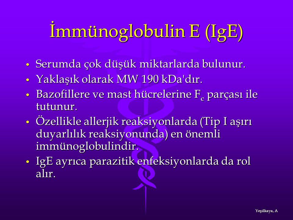 İmmünoglobulin E (IgE)