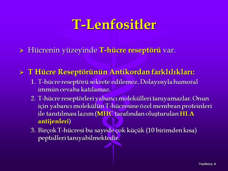 T-Lenfositler Hücrenin yüzeyinde T-hücre reseptörü var.