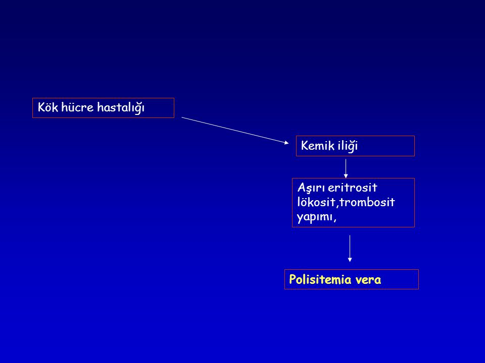 Kök hücre hastalığı Kemik iliği Aşırı eritrosit lökosit,trombosit yapımı, Polisitemia vera