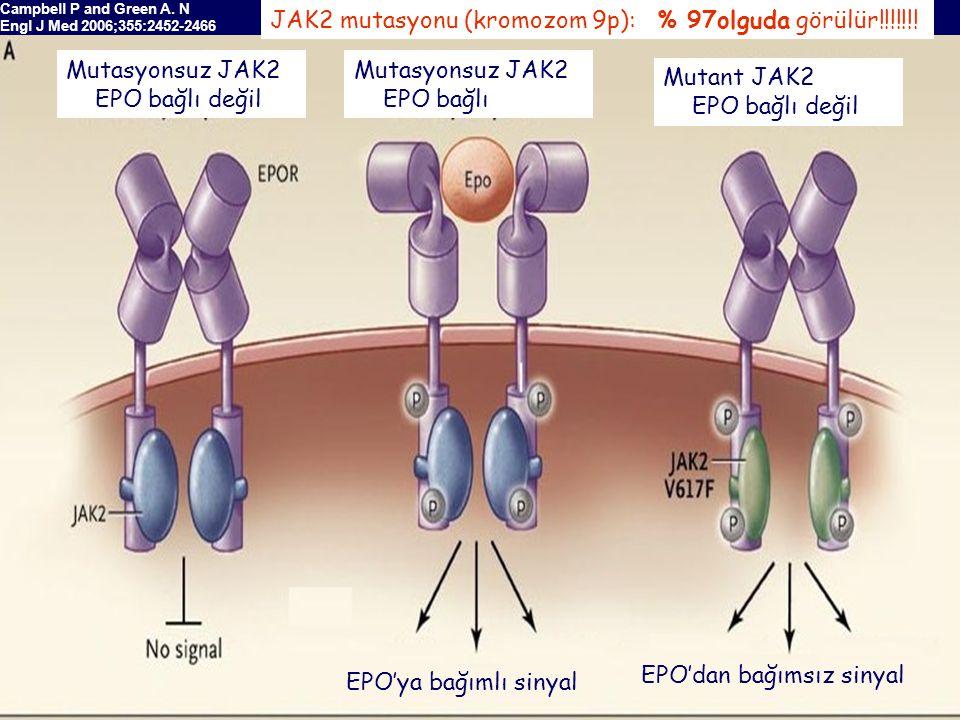 JAK2 mutasyonu (kromozom 9p): % 97olguda görülür!!!!!!!