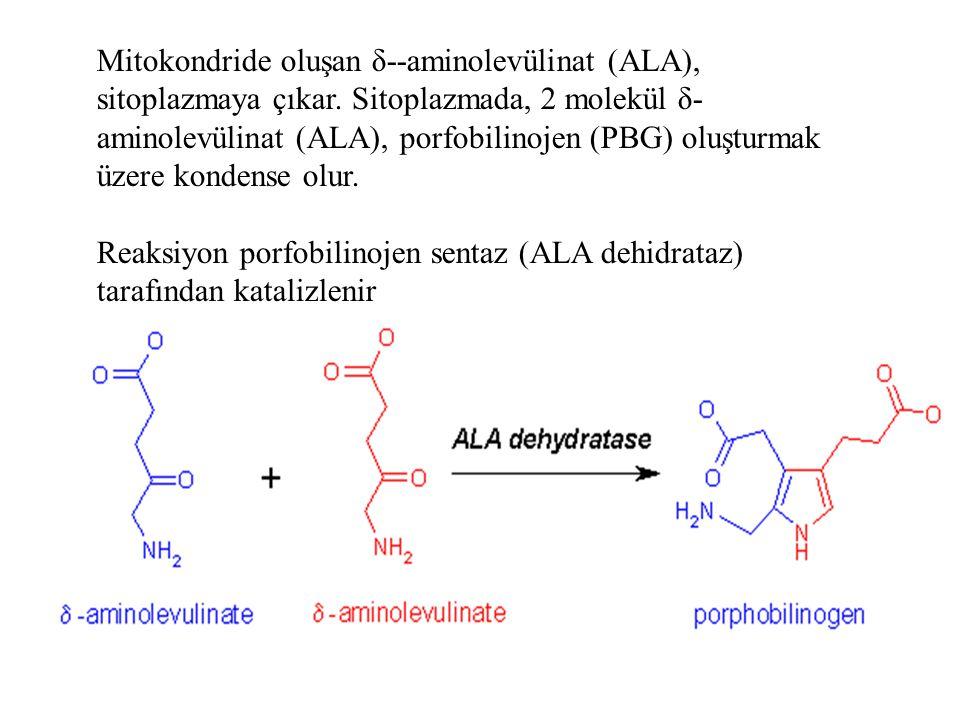 Mitokondride oluşan δ--aminolevülinat (ALA), sitoplazmaya çıkar