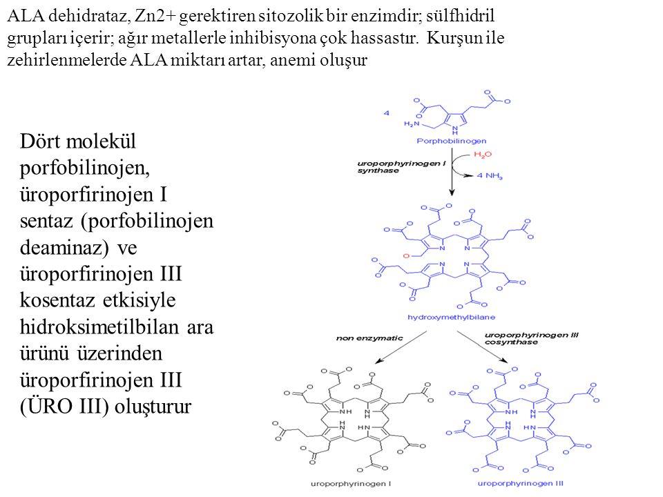 ALA dehidrataz, Zn2+ gerektiren sitozolik bir enzimdir; sülfhidril grupları içerir; ağır metallerle inhibisyona çok hassastır. Kurşun ile zehirlenmelerde ALA miktarı artar, anemi oluşur