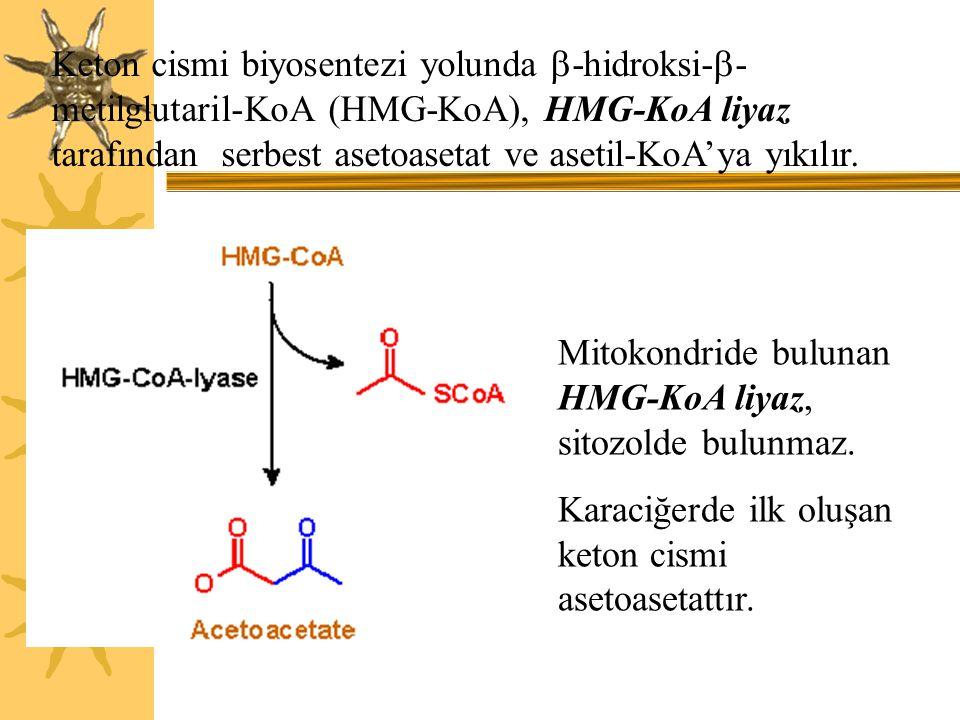 Keton cismi biyosentezi yolunda -hidroksi--metilglutaril-KoA (HMG-KoA), HMG-KoA liyaz tarafından serbest asetoasetat ve asetil-KoA'ya yıkılır.