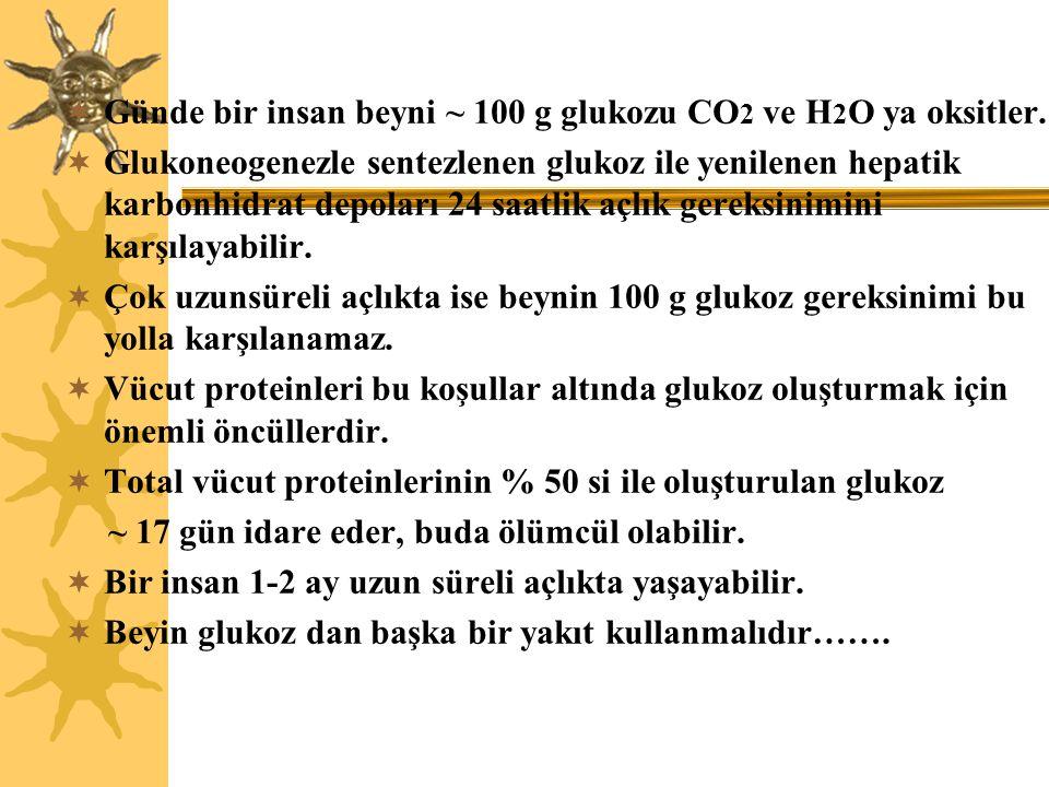 Günde bir insan beyni ~ 100 g glukozu CO2 ve H2O ya oksitler.