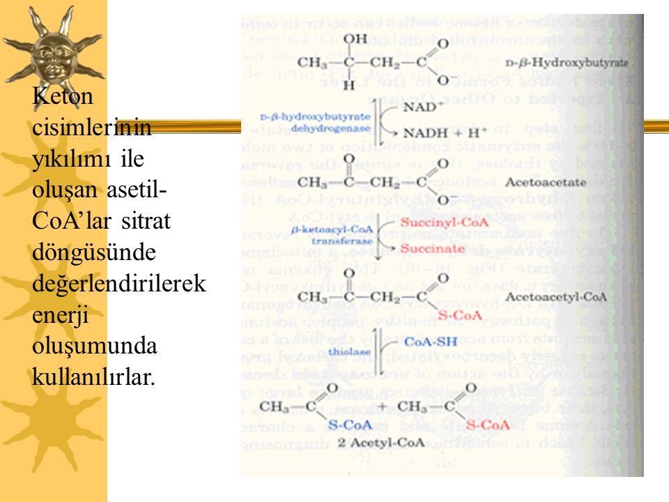 Keton cisimlerinin yıkılımı ile oluşan asetil-CoA'lar sitrat döngüsünde değerlendirilerek enerji oluşumunda kullanılırlar.