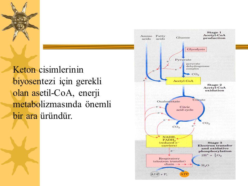 Keton cisimlerinin biyosentezi için gerekli olan asetil-CoA, enerji metabolizmasında önemli bir ara üründür.