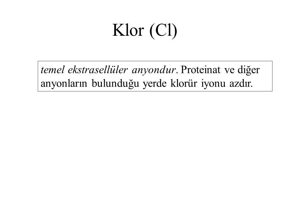 Klor (Cl) temel ekstrasellüler anyondur.
