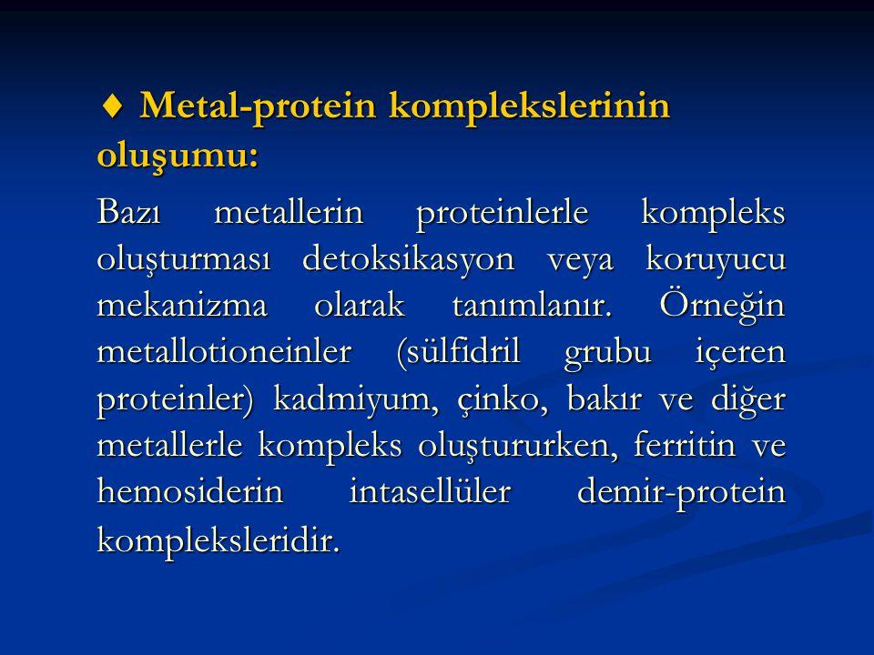  Metal-protein komplekslerinin oluşumu: