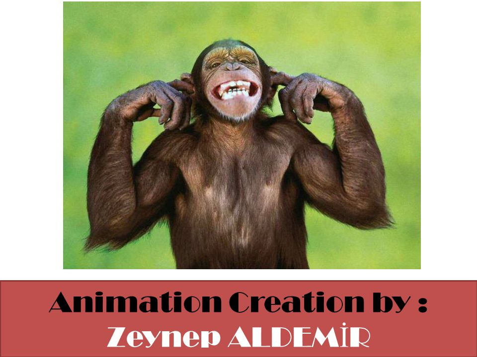 Animation Creation by : Zeynep ALDEMİR
