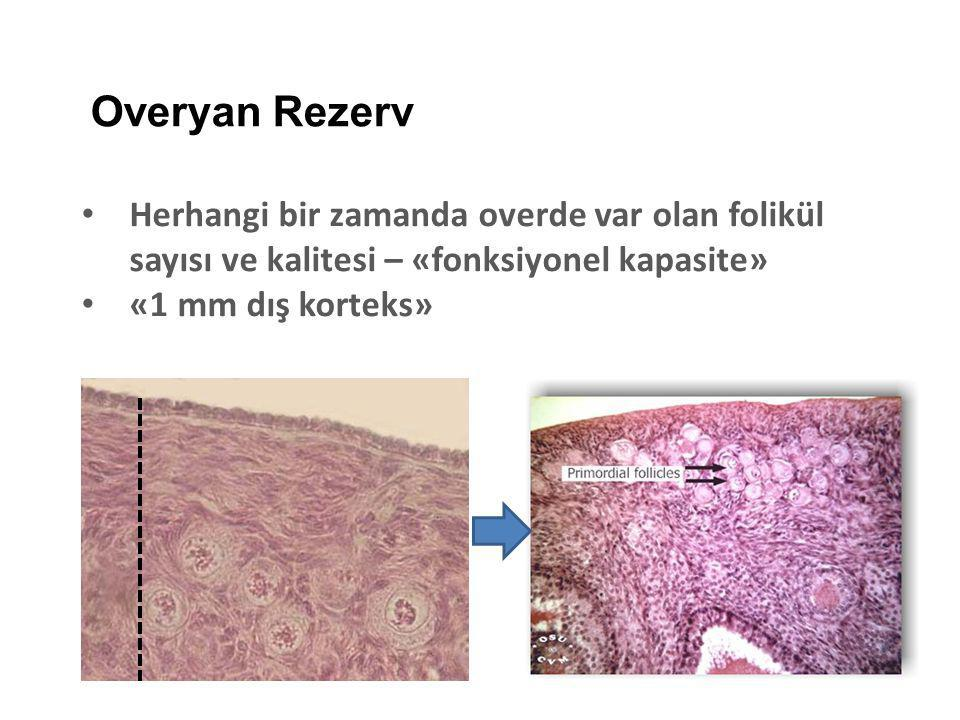Overyan Rezerv Herhangi bir zamanda overde var olan folikül sayısı ve kalitesi – «fonksiyonel kapasite»