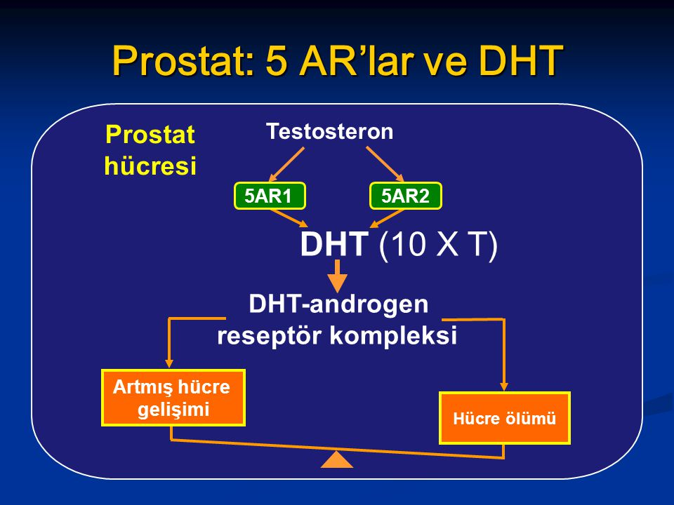 DHT-androgen reseptör kompleksi