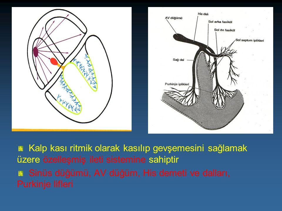 Kalp kası ritmik olarak kasılıp gevşemesini sağlamak üzere özelleşmiş ileti sistemine sahiptir