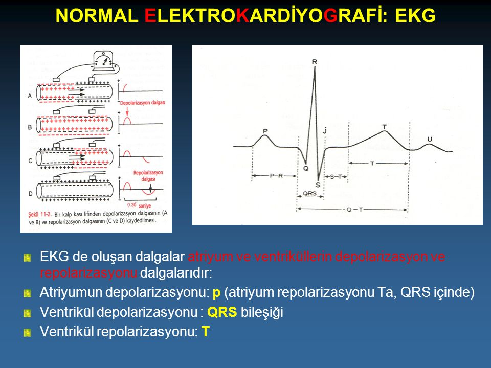 NORMAL ELEKTROKARDİYOGRAFİ: EKG