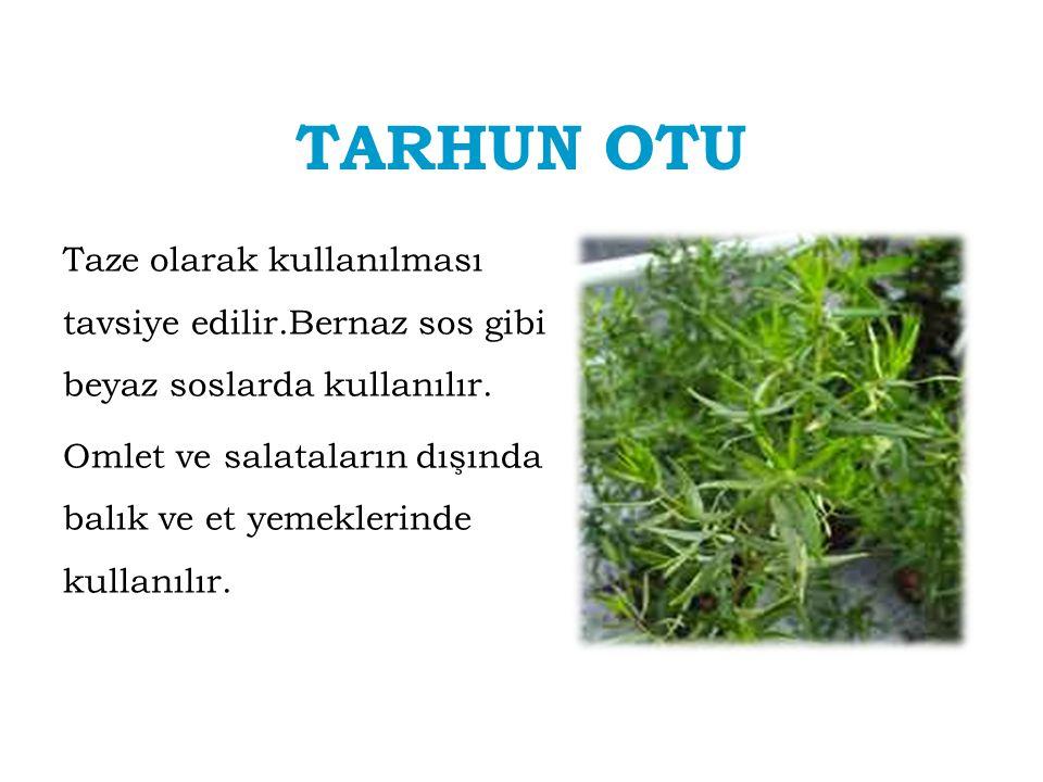 TARHUN OTU