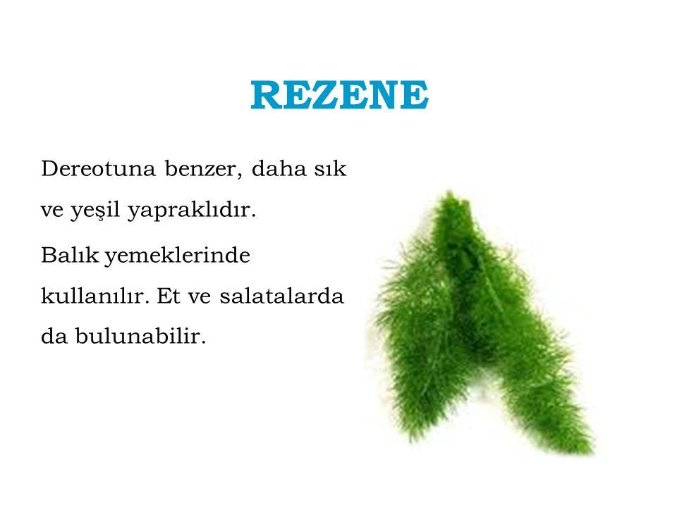 REZENE Dereotuna benzer, daha sık ve yeşil yapraklıdır.