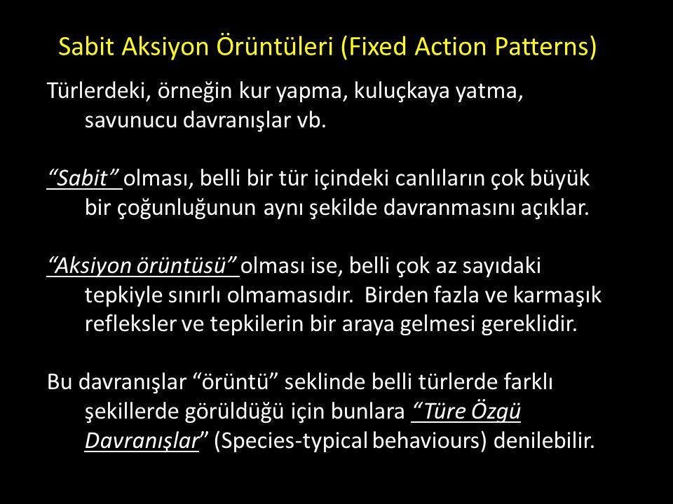 Sabit Aksiyon Örüntüleri (Fixed Action Patterns)
