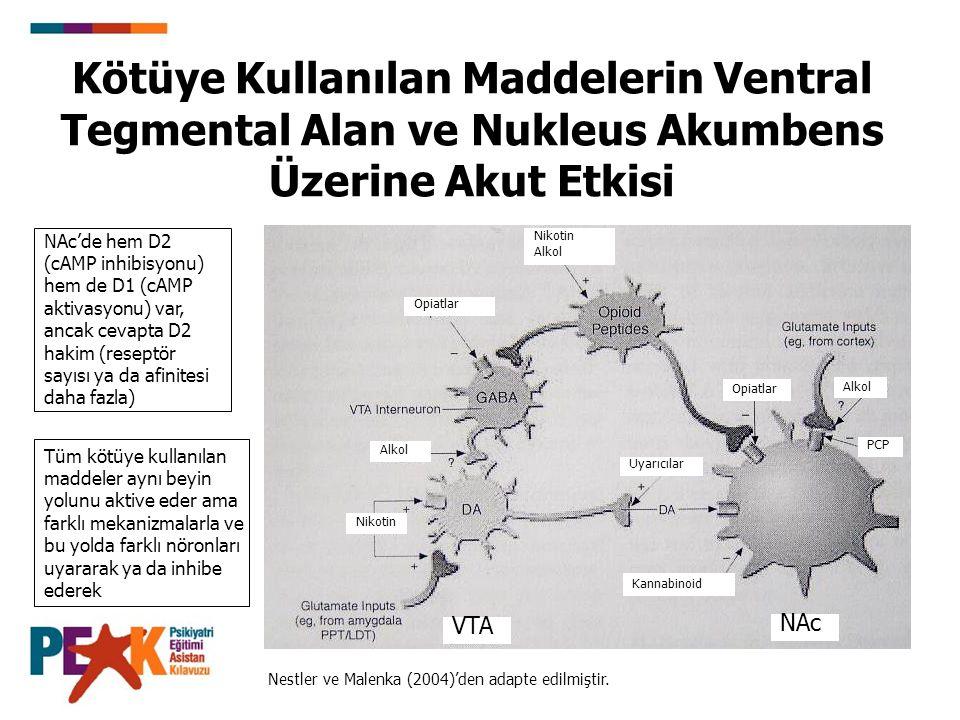 Kötüye Kullanılan Maddelerin Ventral Tegmental Alan ve Nukleus Akumbens Üzerine Akut Etkisi