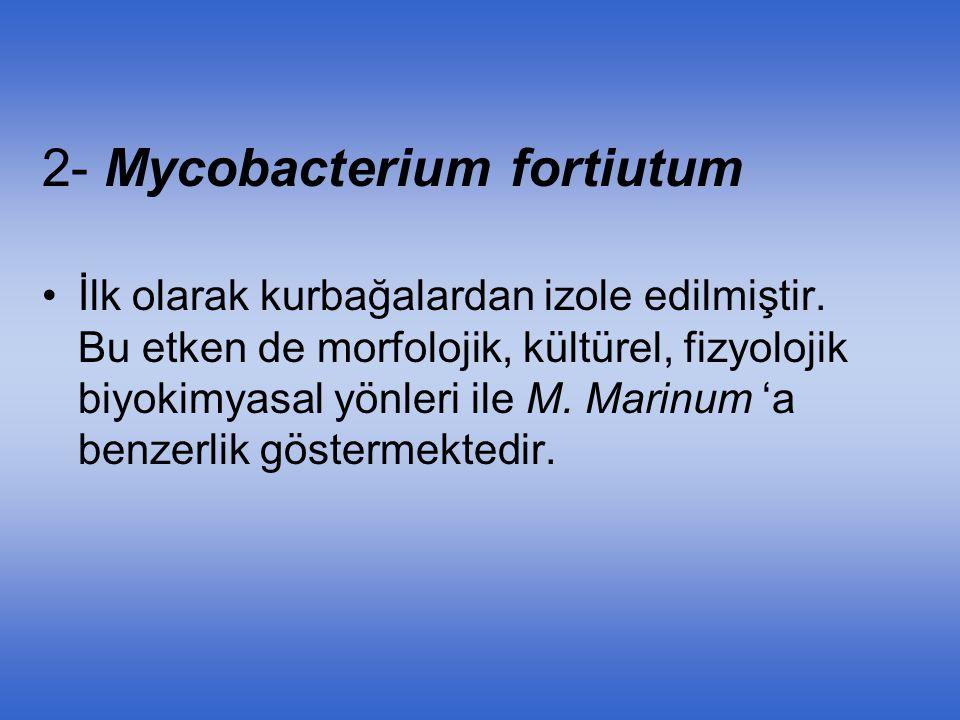2- Mycobacterium fortiutum