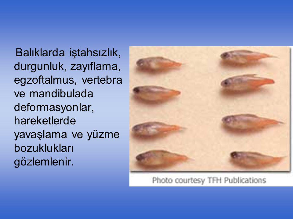 Balıklarda iştahsızlık, durgunluk, zayıflama, egzoftalmus, vertebra ve mandibulada deformasyonlar, hareketlerde yavaşlama ve yüzme bozuklukları gözlemlenir.