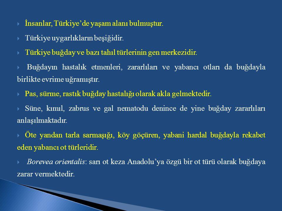 İnsanlar, Türkiye'de yaşam alanı bulmuştur.