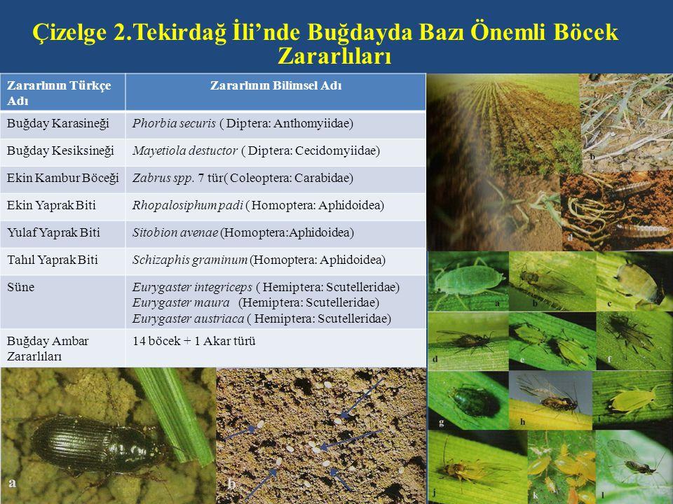 Çizelge 2.Tekirdağ İli'nde Buğdayda Bazı Önemli Böcek Zararlıları