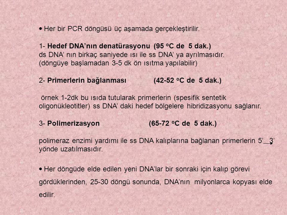 · Her bir PCR döngüsü üç aşamada gerçekleştirilir.