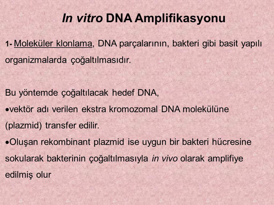 In vitro DNA Amplifikasyonu