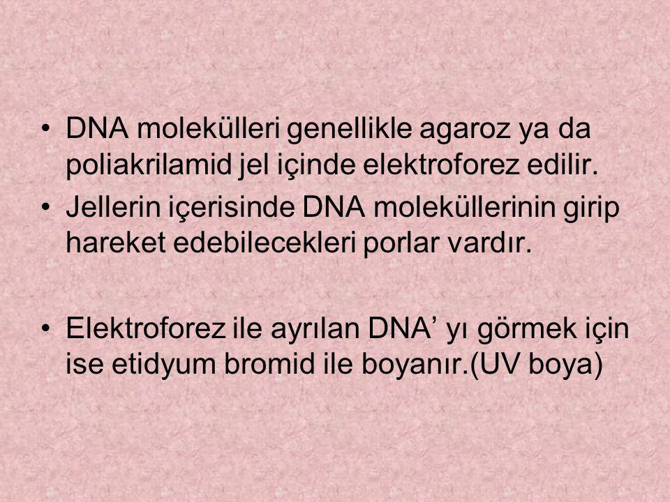 DNA molekülleri genellikle agaroz ya da poliakrilamid jel içinde elektroforez edilir.
