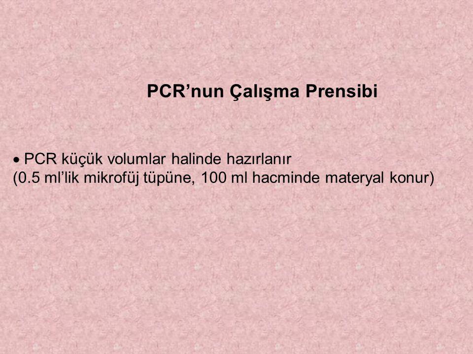 PCR'nun Çalışma Prensibi