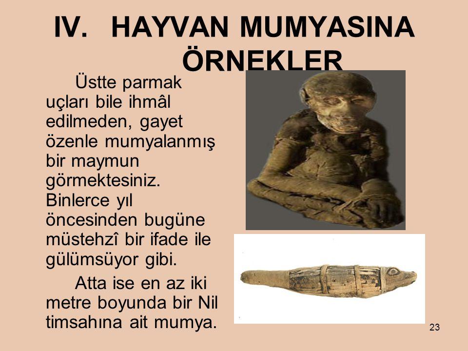 IV. HAYVAN MUMYASINA ÖRNEKLER