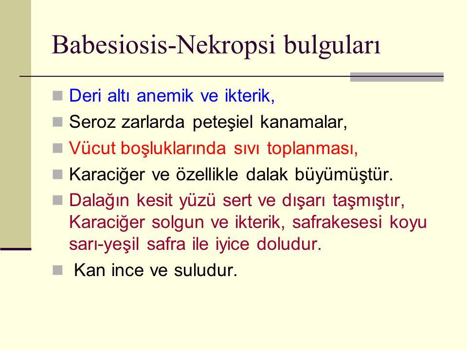 Babesiosis-Nekropsi bulguları