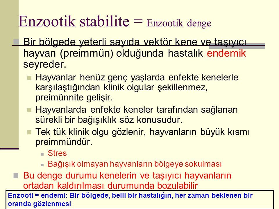 Enzootik stabilite = Enzootik denge