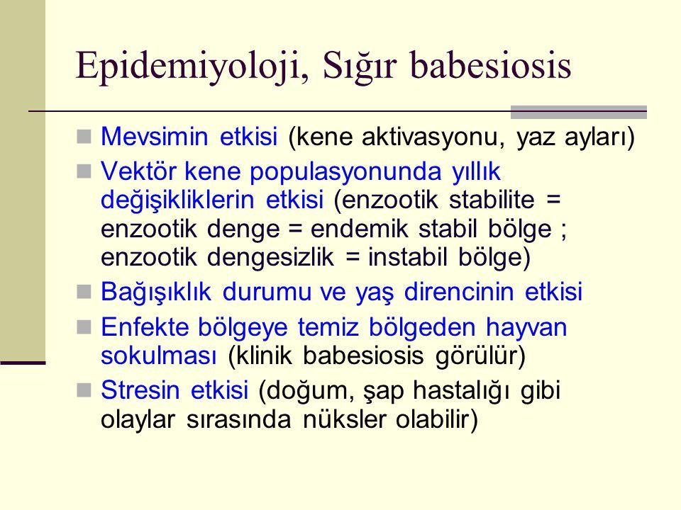 Epidemiyoloji, Sığır babesiosis