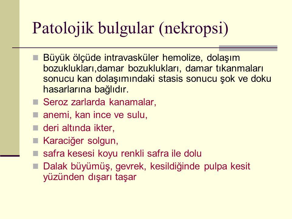 Patolojik bulgular (nekropsi)