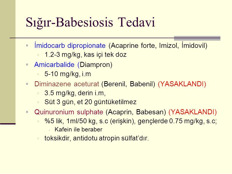Sığır-Babesiosis Tedavi