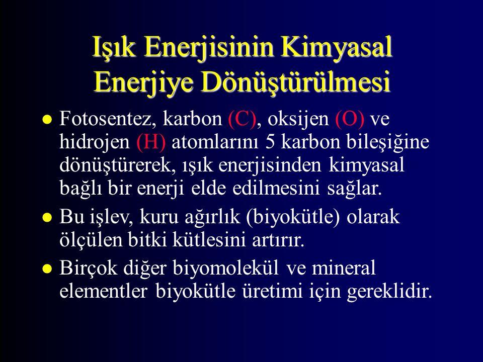 Işık Enerjisinin Kimyasal Enerjiye Dönüştürülmesi
