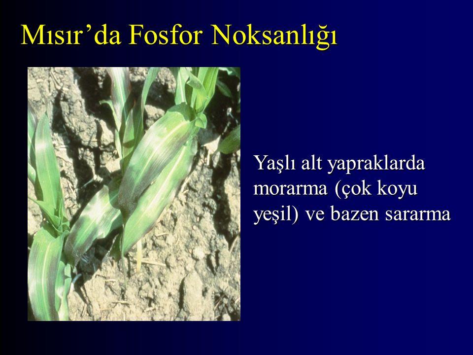 Mısır'da Fosfor Noksanlığı