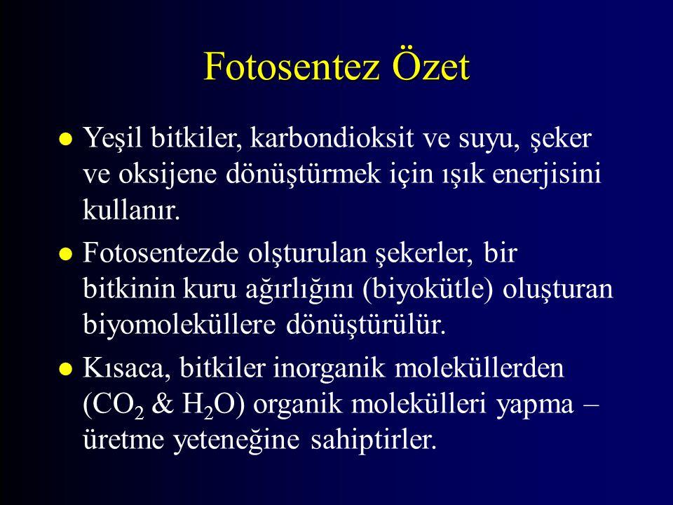 Fotosentez Özet Yeşil bitkiler, karbondioksit ve suyu, şeker ve oksijene dönüştürmek için ışık enerjisini kullanır.
