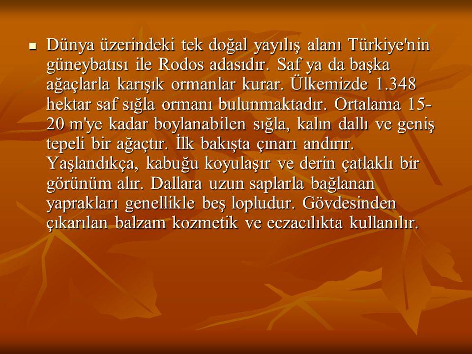 Dünya üzerindeki tek doğal yayılış alanı Türkiye nin güneybatısı ile Rodos adasıdır.