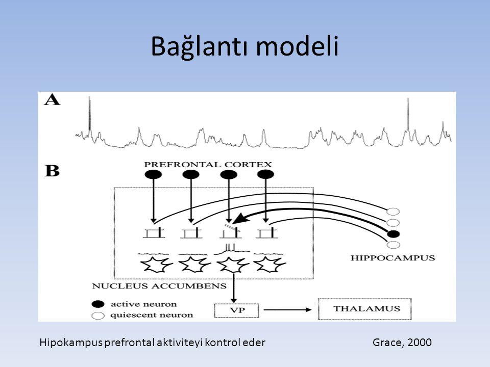 Bağlantı modeli Hipokampus prefrontal aktiviteyi kontrol eder