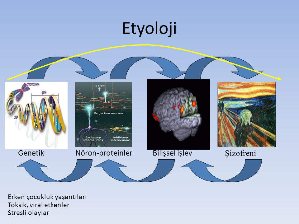 Etyoloji Genetik Nöron-proteinler Bilişsel işlev Şizofreni