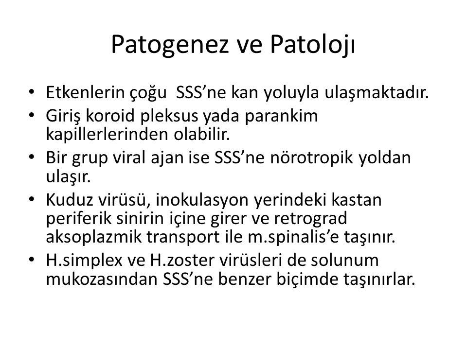 Patogenez ve Patolojı Etkenlerin çoğu SSS'ne kan yoluyla ulaşmaktadır.